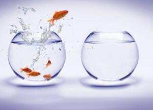 fishbowl-jump